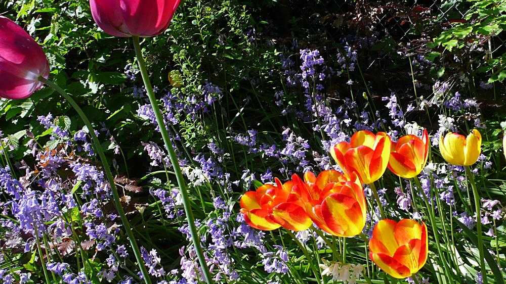 Tulips and things – Panasonic DMC-LX2; Developed with GIMP
